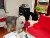 2010-03-25 Balou&Mogli