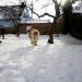 2010-02-03tis2_fc.jpg