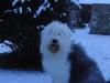 2010-12-14 Schneegarten