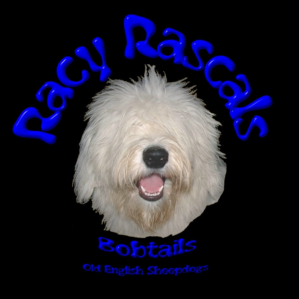 Bobtails, Old English Sheepdogs, OES aus der Hobbyzucht Racy Rascals